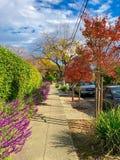 秋天街道在圣何塞市 库存图片
