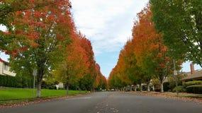 秋天街道 库存图片