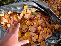 秋天袋子叶子 免版税图库摄影