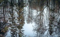 秋天被反射的结构树水 免版税库存图片