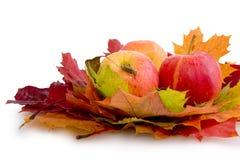 秋天被隔绝的槭树叶子和三个苹果 免版税库存图片