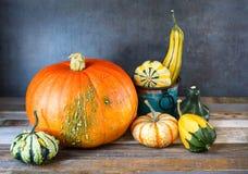 秋天装饰南瓜和金瓜的安排在自然土气木背景 免版税图库摄影