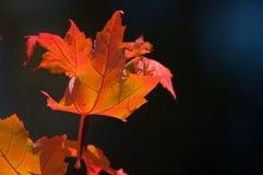 秋天装饰品 免版税库存图片