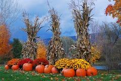 秋天装饰在一风暴日 免版税图库摄影