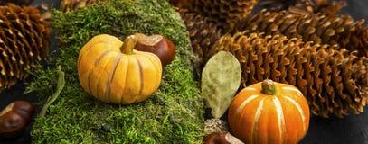 秋天装饰用在青苔的南瓜,栗子,锥体和 免版税库存图片