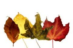 秋天装饰秋天离开寂静的工作室 免版税库存照片