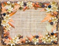 秋天装饰花卉框架 库存图片