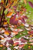 秋天装饰详细资料家庭理想的办公室 偏僻的美丽的秋季树和绿草 库存照片