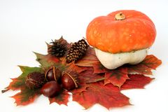 秋天装饰 库存图片