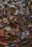 秋天褐色在水,季节性墙纸中把纹理留在 图库摄影