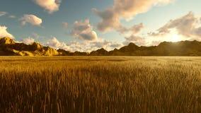 秋天视图、黄色草、天空蔚蓝与云彩,早晨太阳和山在距离 美好的夏天圈 股票录像
