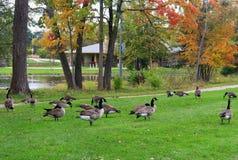 秋天视图在城市公园 免版税库存图片