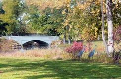 秋天视图在城市公园 免版税库存照片