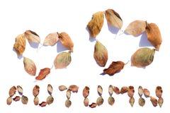 秋天设计元素 秋天在白色背景留给以的形式心脏文本 免版税库存图片