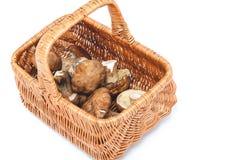 秋天设计元素集向量 篮子和蘑菇 库存图片