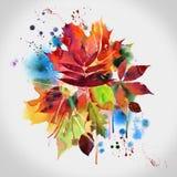 秋天设计花卉绘画水彩 免版税图库摄影