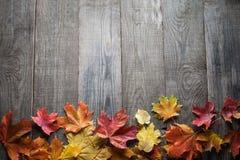 秋天词和题字,拷贝空间的叶子框架 免版税图库摄影