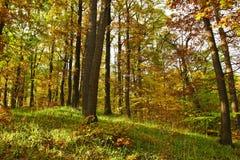 秋天详细资料早期的森林 免版税库存照片