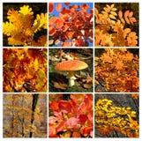 秋天详述森林金蘑菇 免版税库存照片