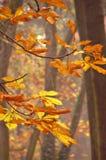 秋天详述结构树 免版税库存图片