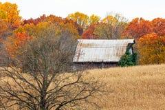 秋天谷仓和树在玉米田 免版税库存照片