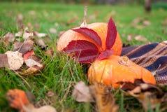 秋天财富-自然的菜和油漆 免版税库存图片