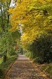 秋天走的森林 库存图片