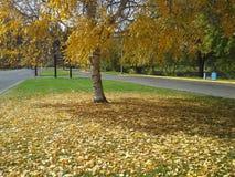 秋天起点 图库摄影