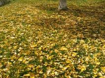 秋天起点 库存照片