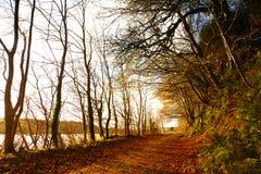 秋天路。Co.Cork,爱尔兰。 免版税库存照片