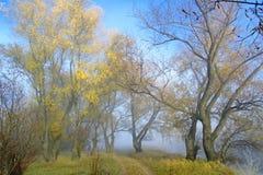 秋天路在一个老杨柳森林把变成早晨雾 免版税图库摄影
