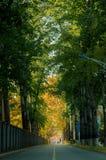 秋天路在学院 库存图片