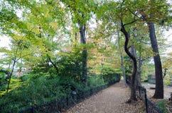 秋天路在森林里 免版税图库摄影