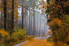 秋天路在森林里 免版税库存照片