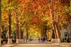 秋天路场面在学院 免版税图库摄影