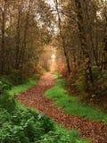 秋天路径森林地 免版税库存照片