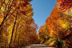 秋天路径 库存图片