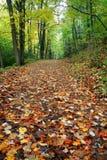 秋天路径 库存照片