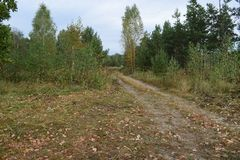 秋天路的看法向森林的 库存图片