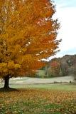 秋天路线高尔夫球结构树 库存图片