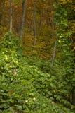 秋天车落基印第安人的kudzu nf 图库摄影