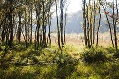 秋天轻的特殊结构树 库存图片