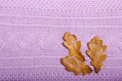 秋天辅助部件编织了毛线衣和叶子 库存图片