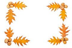 秋天边界 库存图片