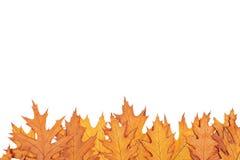 秋天边界 免版税图库摄影