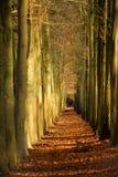 秋天运输路线一点 库存照片