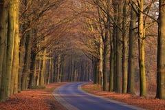 秋天运输路线沙子结构树 免版税库存图片