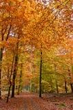 秋天运输路线结构树 免版税图库摄影