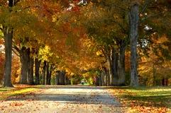 秋天运输路线 库存图片