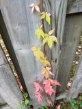 秋天进步  图库摄影